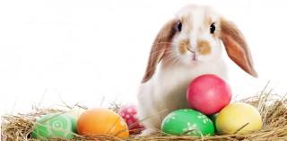 Servico wünscht Frohe Ostern!